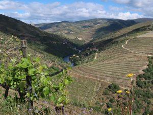 Im Tal des Douro